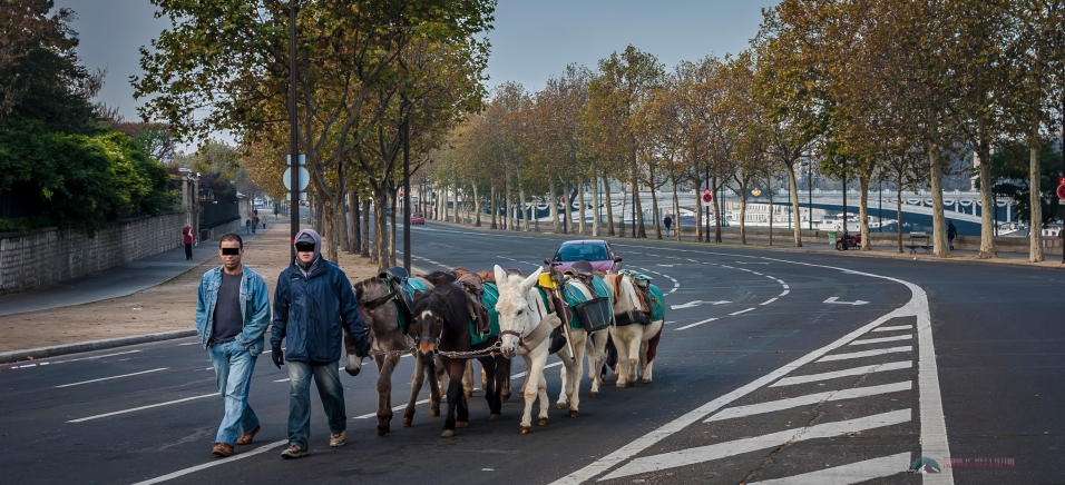 A rare scene in Paris traveling by donkey....