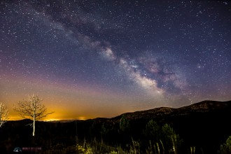 A lonely dead tree under the Milky Way in La Rioja.